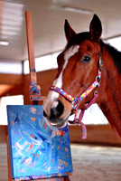 Photo's of Metro The Retired Racehorse Painter 1/29/13